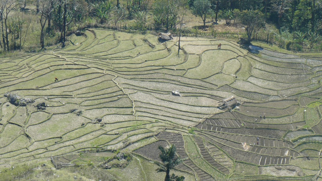 Rice Paddies From Mt Ariana